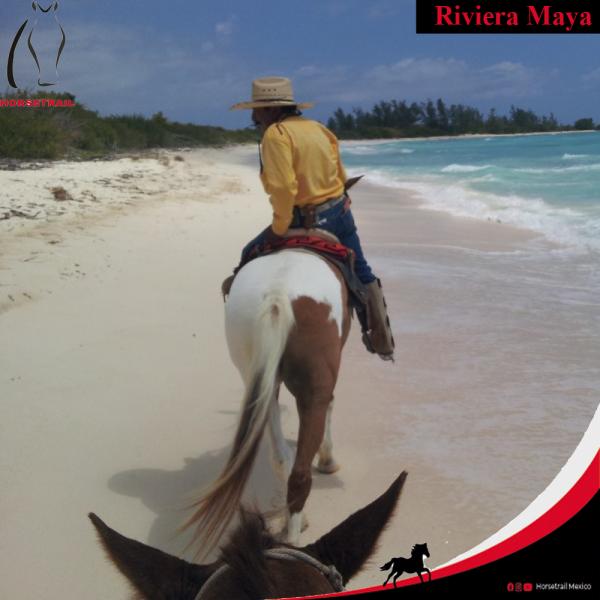 ENG HORSETRAIL Horseback Riding Riviera Maya